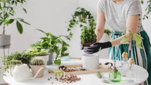 How to Start Gardening In Home Balcony